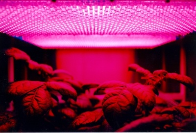 led grow lights setup