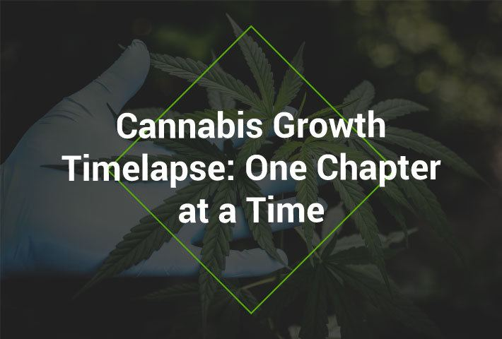 Cannabis_Grownth_Timelapse_Featured