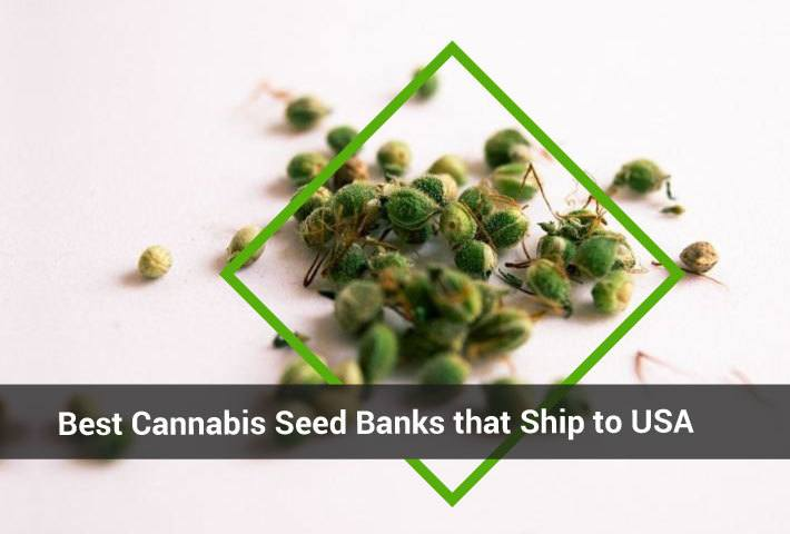 Cannabis_Seed_Banks_Header