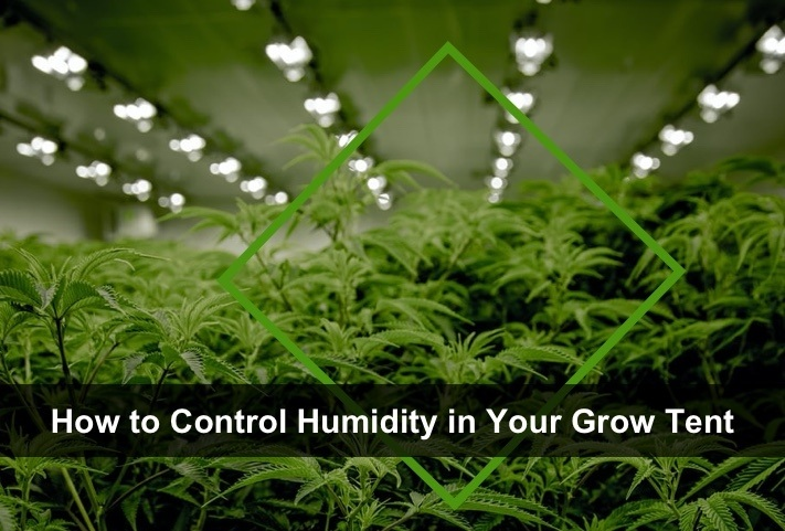 control humidity in tent 2