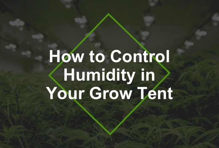 control humidity in tent