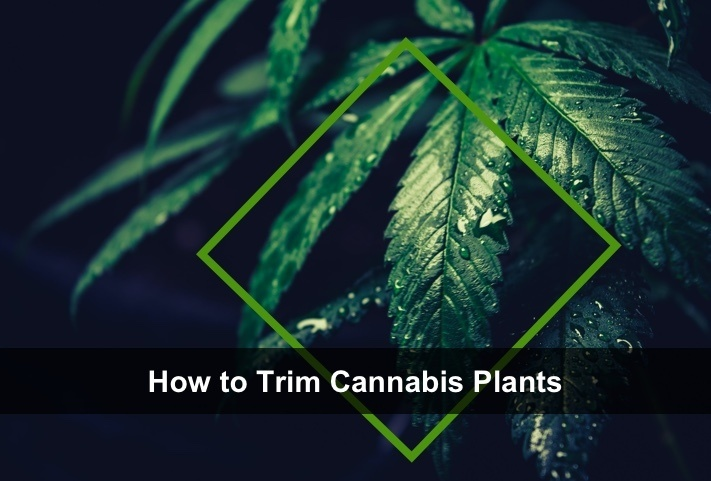 how to trim plants 2