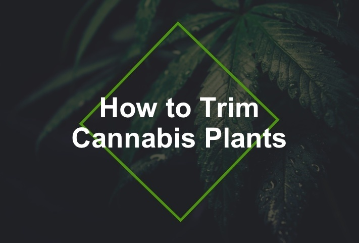 how to trim plants